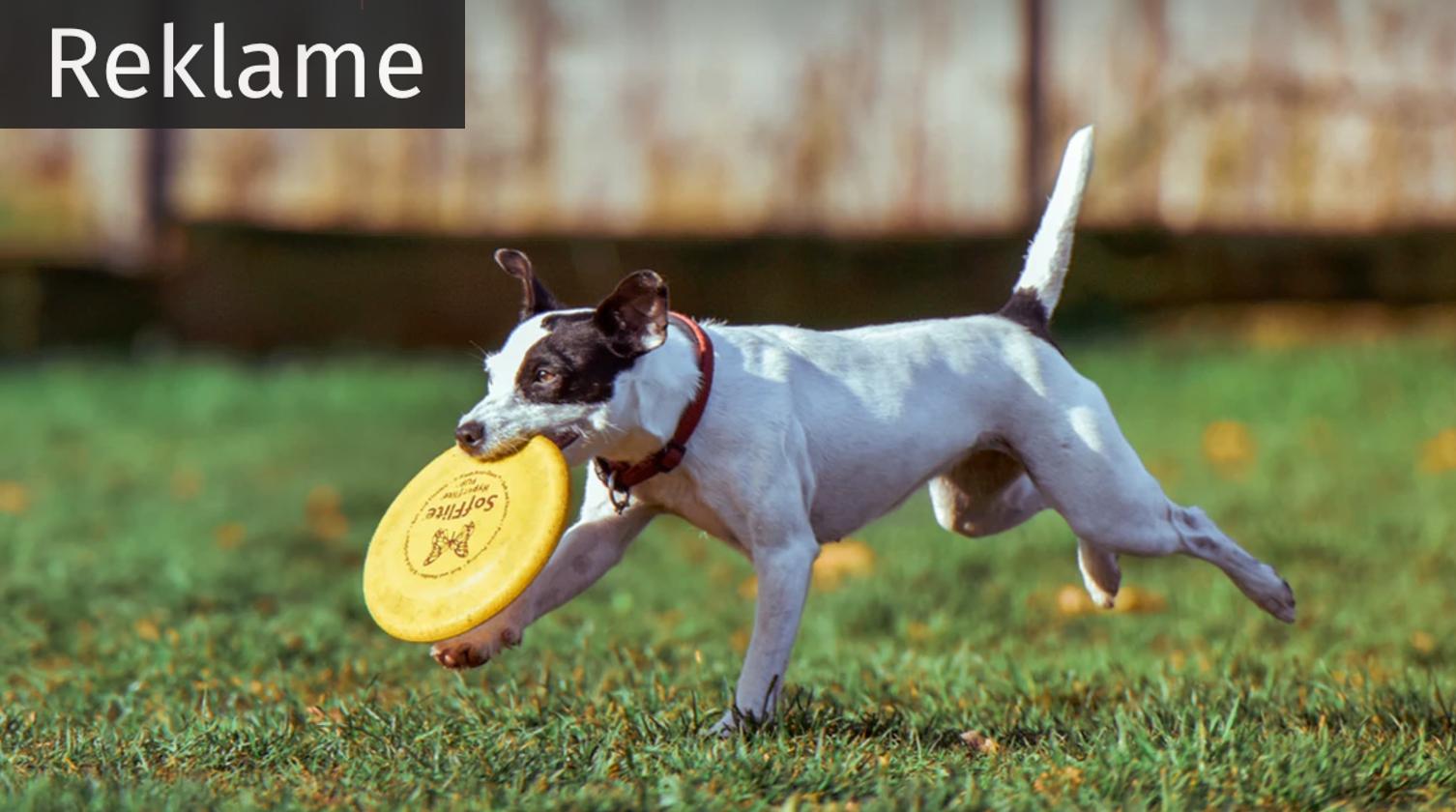 Få en hund — og investér i en sundere fremtid