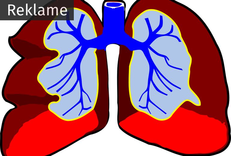 lungs-296392_1280