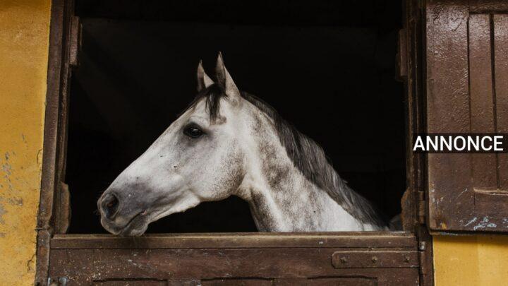 Øg din hests sundhed med vitamin- og mineraltilskud